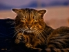 Кошак 2