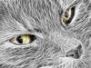 Кошак 3