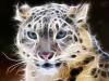 Пантера 5