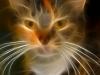 Кошак 4
