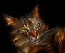 Кошак 5